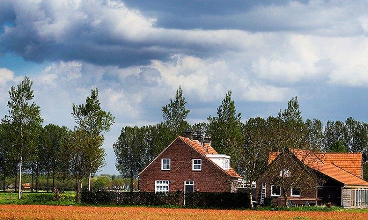 Brabant kleurt Oranje van velden vol Roundup