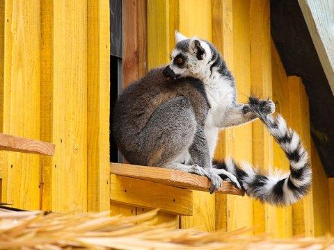 Madagaskar in Zooparc Overloon