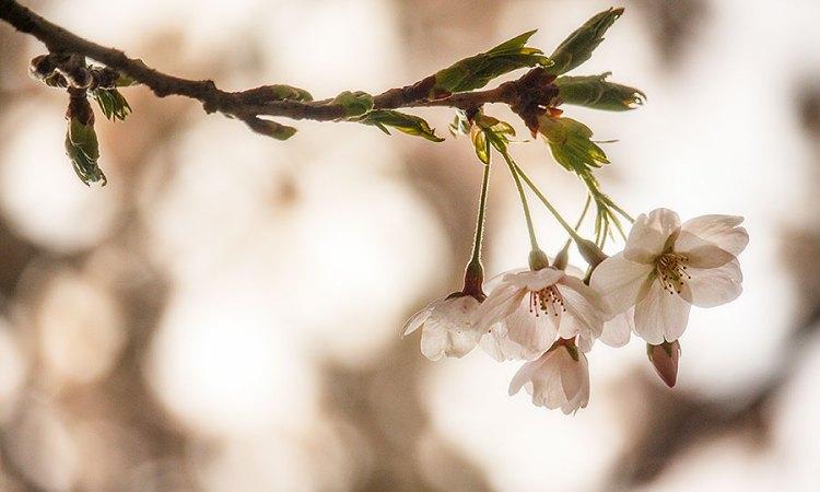Fotoserie: Praatje onder de bloesem