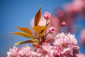 Fotoserie: Bloesembollen in de zon