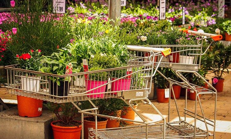 Een verrassing in de tuinwinkel