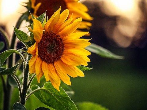 Fotoserie: Bloemen om wild van te worden