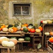 Fotoserie: Pompoenen in Groesbeek