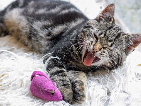 19 dingen die ik niet wist over kittens