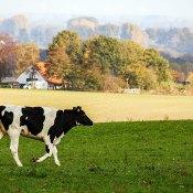 Fotoserie: De herfst in Groesbeek