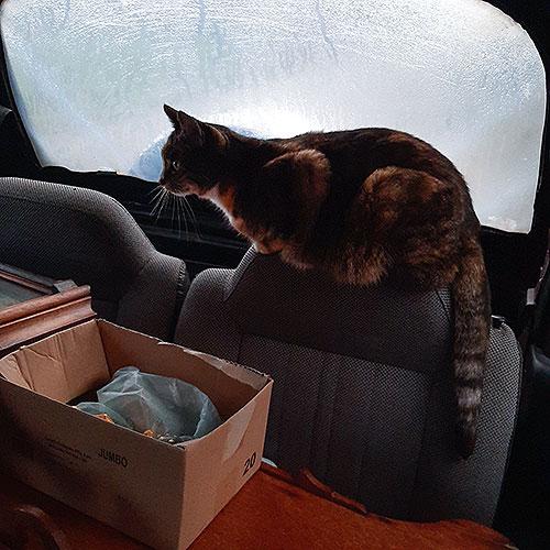 Maria in de auto