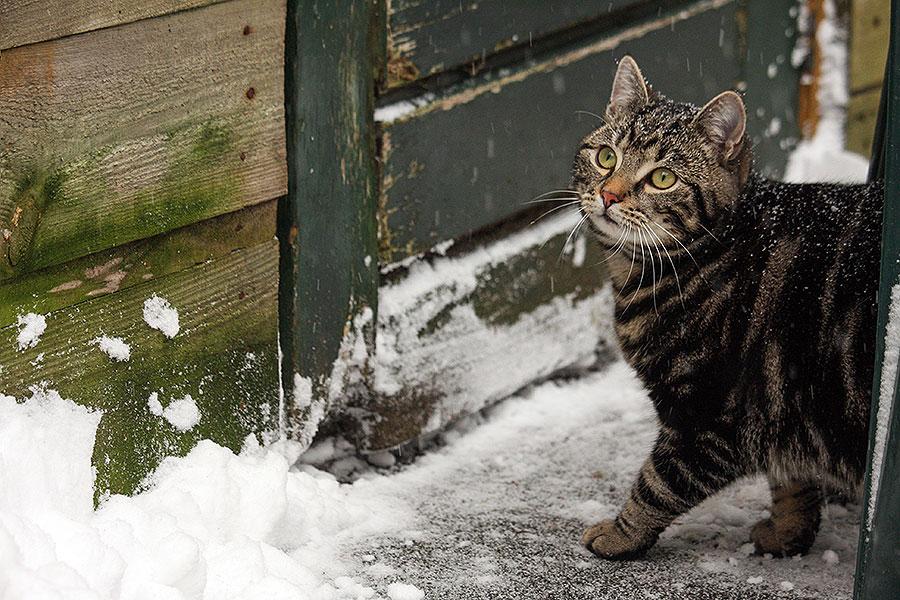 Fotoserie: Mickey in de sneeuw