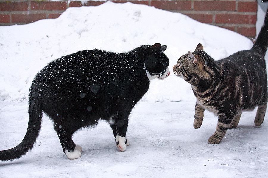 Doezel en Mickey in de sneeuw