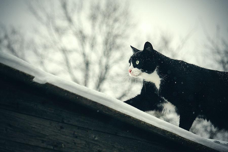 Doezels week sneeuw, snot en lente