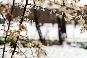 Fotoserie: Alweer sneeuw?!