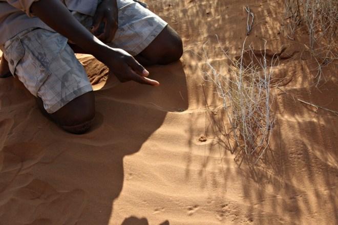 Francis-zeigt-uns-ein-Spinnennest-auf-dem-Bushmans-Walk