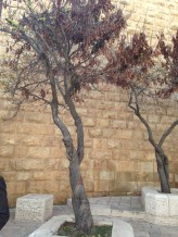 the drying trees