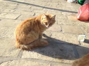 the cat who guard the mosque?