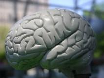 ES Smegenų tyrimų mėnuo pradedamas 150 mln. EUR parama moksliniams tyrimams