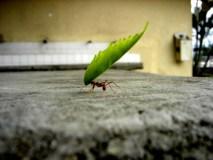 Kaip naikinti skruzdėles: kenkėjų kontrolės ekspertų patarimai