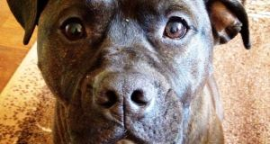 Kuo skiriasi šunų ėdalo rūšys?