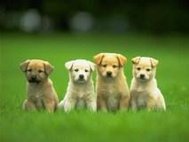 Privatūs veterinarijos gydytojai negalės išduoti gyvūnų augintinių pasų