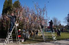 Šeduvoje – didžiausias Lietuvoje Velykų medis