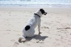 Bus leidžiama paplūdimiuose poilsiauti kartu su gyvūnais