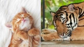 Gyvūnų pasaulio įdomybės: kodėl vienų miegas ilgas ir ramus, o kiti miega tik 2 valandas?