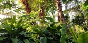 Kauno botanikos sodas kviečia švęsti viduržiemį