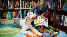 Į Kauno bibliotekas grįžta skaitymai su šunimi: kuo jie naudingi?