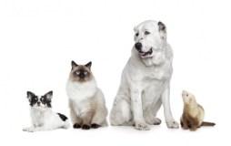 Žinia augintinių šeimininkams: paženklinti gyvūnus būtina, bet paprasta