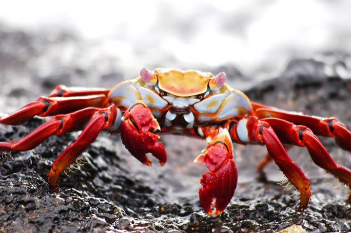 Law Enforcement Agencies Release New GandCrab Decryption Tool