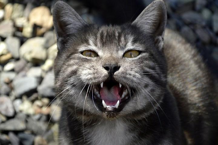 Dangerous Internet's Cat Meow
