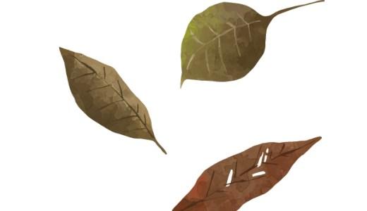 【トビムシの駆除・対策方法】家の中(風呂場、水槽、観葉植物など)で大量発生!?【ぴょんぴょん飛ぶ虫(黒・白)】