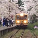 芦野公園の桜2108