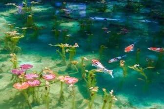 モネの池見頃や場所とアクセス
