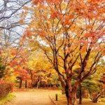 「晩秋」と「晩秋の候」の時期はいつ?違いや使い方もご紹介!