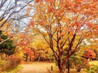 晩秋と晩秋の候