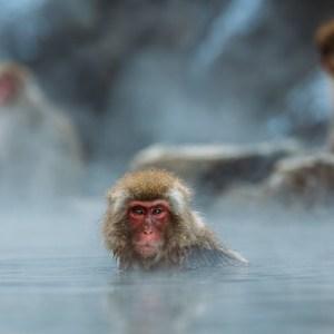 風呂上りの筋トレは筋肉に悪影響か?