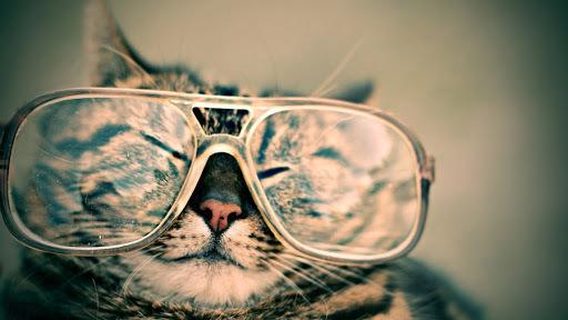 メガネかけてる女が嫌いってやつってwwwwwwwwwww