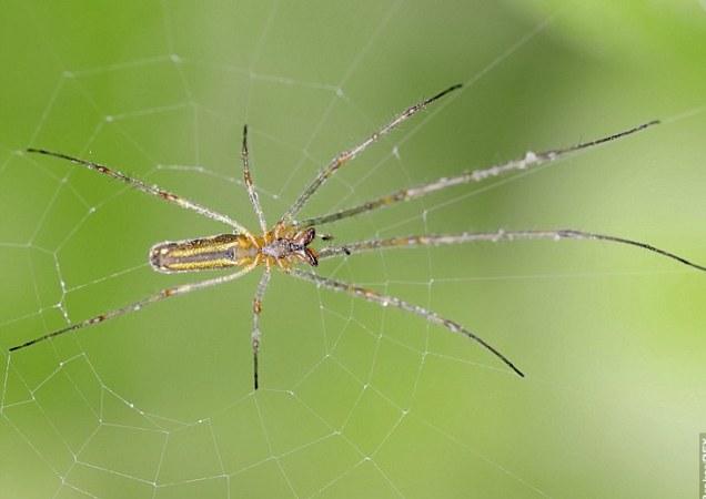 107 миллионов пауков нашли на заводе в Балтиморе