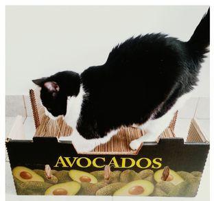 Коврик для кошачьих царапок из картонных коробок.