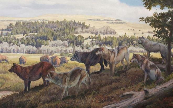 Люди в эпоху палеолита ели волчье мясо.