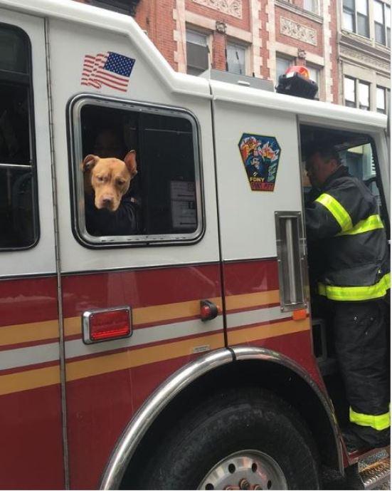 Эш в пожарной машине.