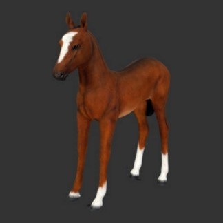Foal-Brown-Lifesize-Realistic-Model