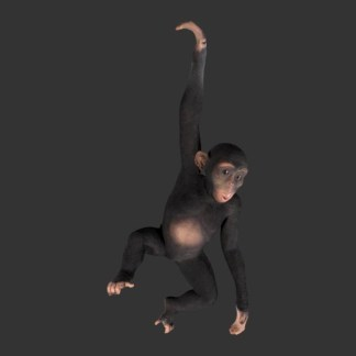 Black Chimp Hanging Life Size Animal Model