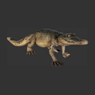 Crocodile Walking Realistic Models Sculpture Life Sized Model Life Size Replica statue cars Replica Models Dinosaurs life size figurines Albshed Alba shed