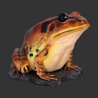 Great Barred Frog Statue 3D Realistic Life Size Model