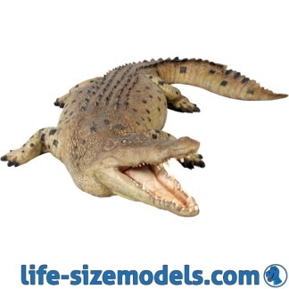 Crocodile Mouth Open 12ft Statue