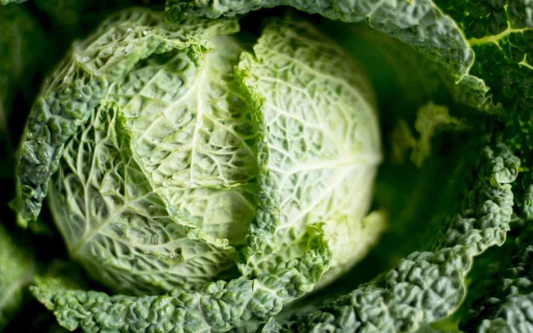 《蕈菇千層白菜》心情鬱悶嗎?試試這道料理吧!