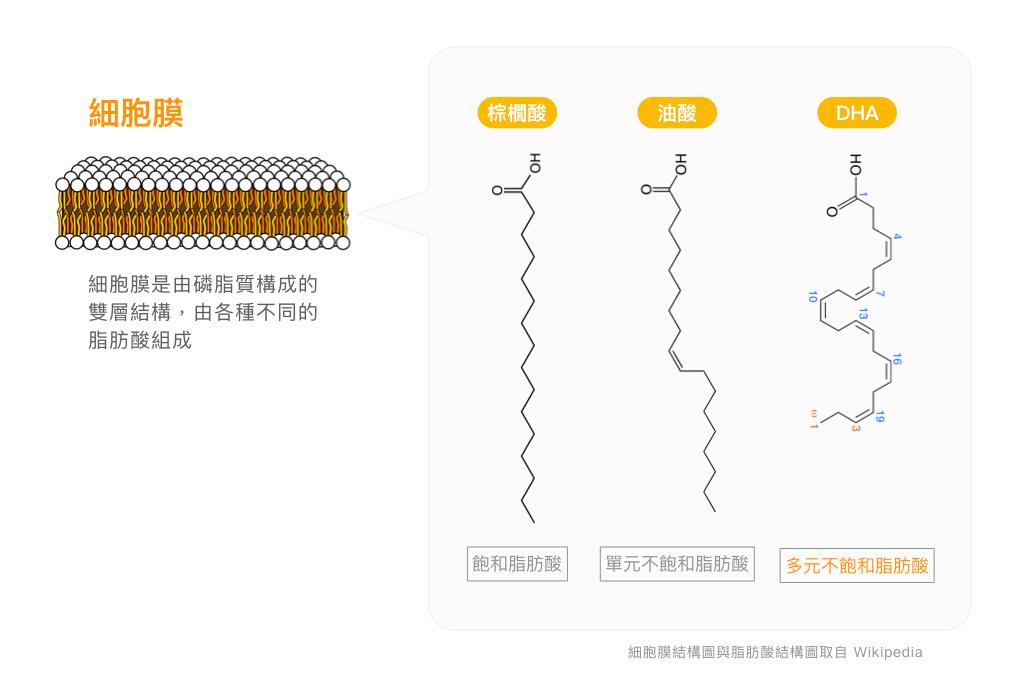 omega-3脂肪酸-魚油-EPA-DHA-ALA-亞麻仁油