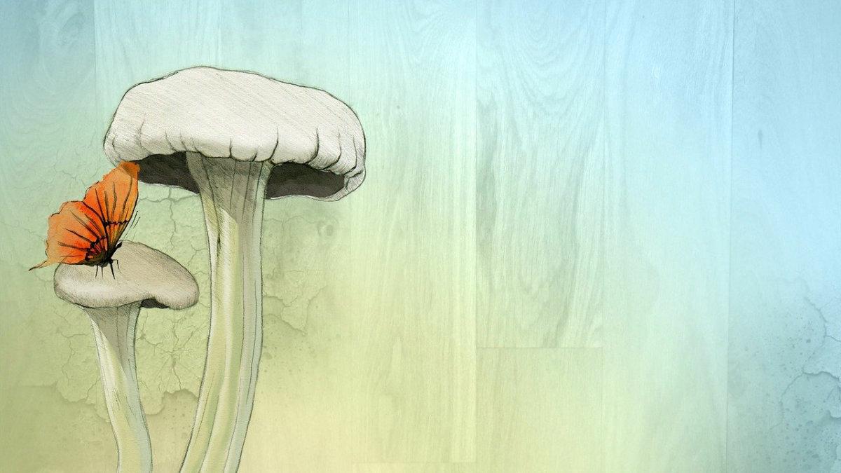 泛酸-維生素B5-香菇