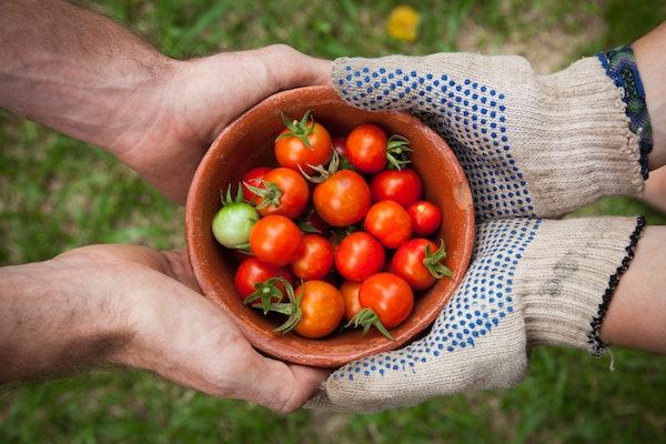 GABA-自律神經-鹽地番茄