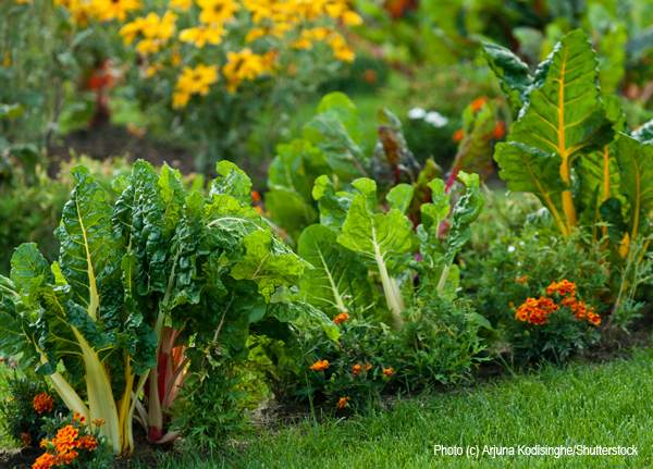 How To Create An Edible Landscape For Your Home